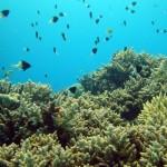 info scufundari Egipt Hurghada