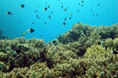 info_scufundari_scuba-diving_Egipt
