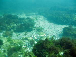 marea-neagra_eforie_scufundari_scuba-diving_135