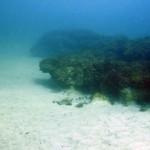 marea-neagra_eforie_cursuri_de_scufundari_scuba-diving_ 139