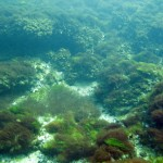 marea_neagra_cursuri_de_scufundari_scuba-diving_eforie_ 149