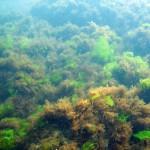 marea-neagra_cursuri_scuba-diving_scufundari_024_