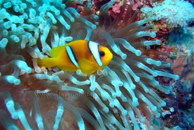 scufundari_scuba-diving-Egipt-hurghada-marea-rosie