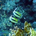 voucher_cadou_scufundari_scuba-diving_egipt