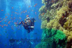 ion_buncea_scuba-diving_scufundare_egypt_marea_rosie