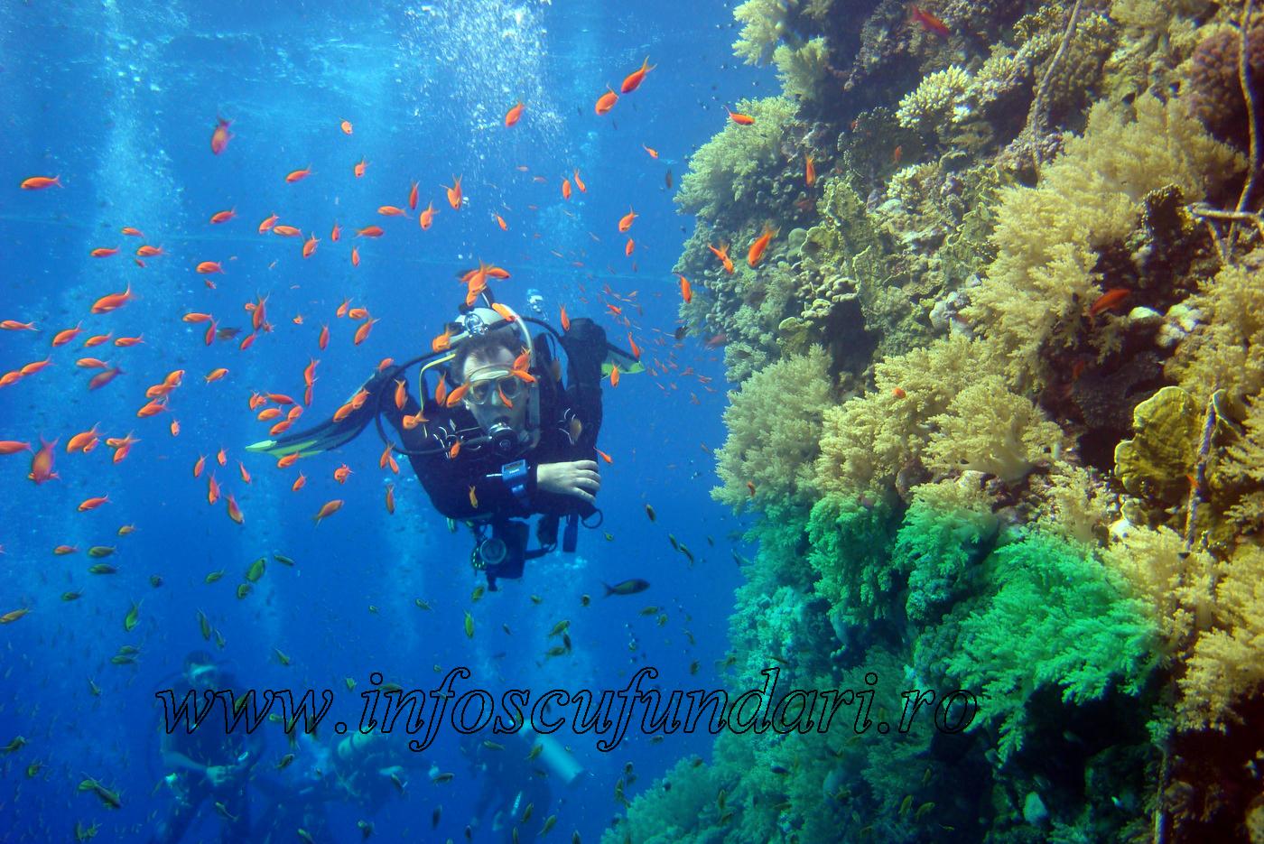 tabara de scufundari pentru copii