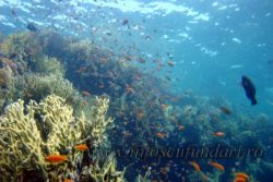 scufundari_scuba-diving_marea-rosie_egypt_ion_buncea