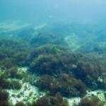 marea-neagra_cursuri_de_scufundari_scuba-diving_eforie_157