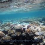 cursuri_scufundari_scuba-diving_copii_egypt_marea-rosie_04014