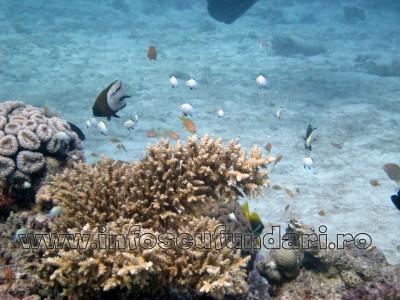 cursuri_scufundari_scuba-diving_marea_rosie_01316