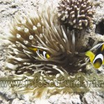 cursuri_scufundari_scuba-diving_marea_rosie_egypt_01716